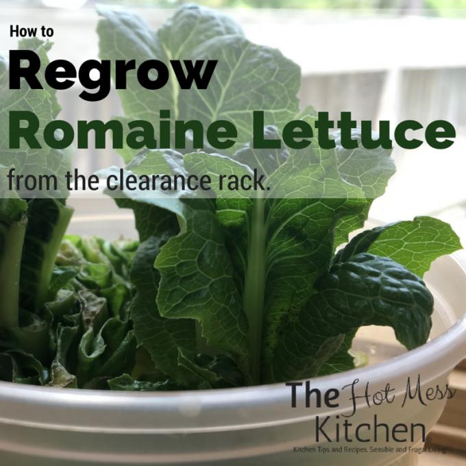 Best 25 Regrow Romaine Lettuce Ideas On Pinterest: How To Regrow Romaine Lettuce From The Clearance Rack